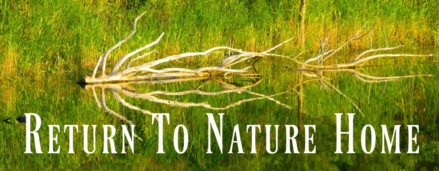 naturebuttret2