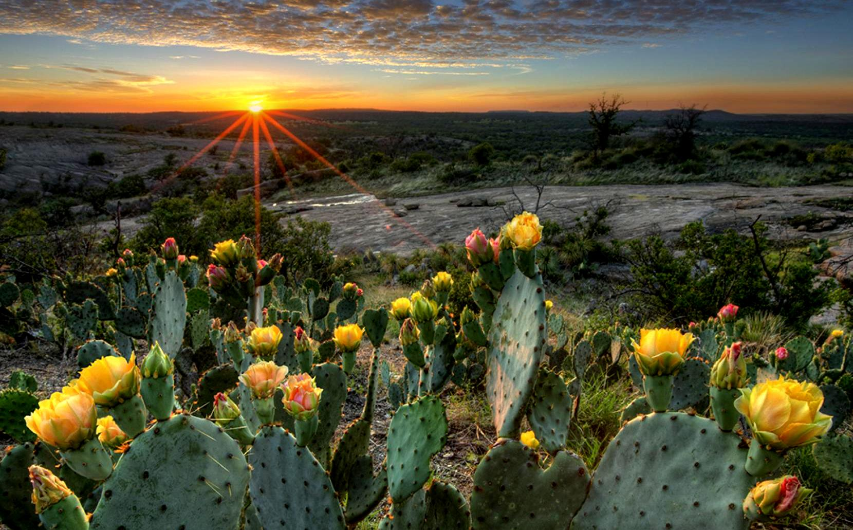Image%20result%20for%20cactus%20flower%20clap